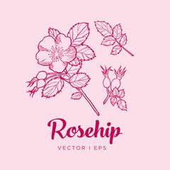 Rosehip illustration vector editable
