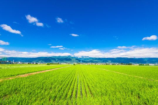 信州 安曇野の田園風景