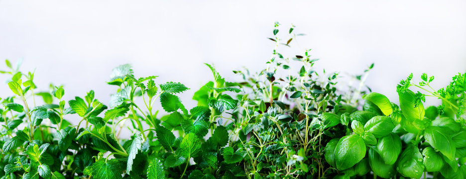 Green fresh aromatic herbs - melissa, mint, thyme, basil, parsley on white background. Banner collage frame from plants. Copyspace. Top view.