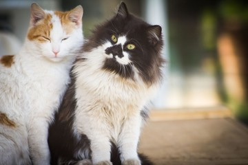 Two cats relaxing together. Animal friendship.