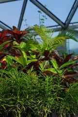 鮮やかな熱帯植物
