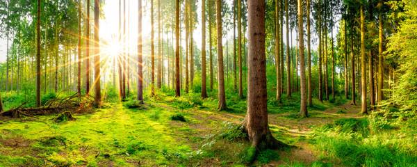 Fototapete - Ein Morgen im Wald mit wunderschönem Sonnenaufgang