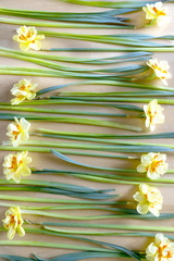 Many yellow narcissus are on the table