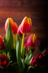 Tulipano rosa