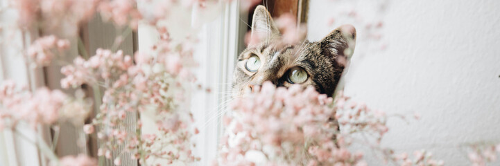 Happy spring-time with amazing cat - Banner Fototapete