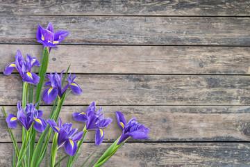 Deurstickers Iris Spring Iris Flowers