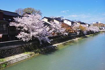 Cherry blossom in Ishikawa in Japan