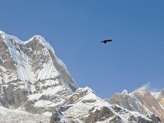 Poster Eagle Black bird next to the peaks of the himalayas - Nepal, Himalayas