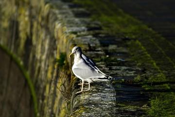 Seagulls at the edge