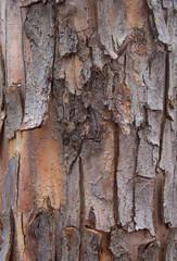 Photo sur Toile Les Textures Tree bark for backgrounds