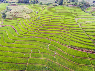 Aerial view of beautiful rice terrace in a mountain