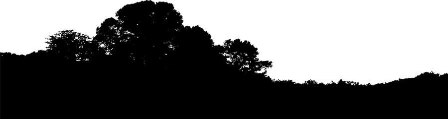Realistic trees silhouette. Horizontal landscape vector. Isolated on white