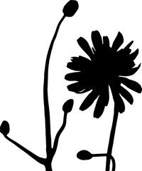 WIldlfower silhouette in black and white, isolated with no background