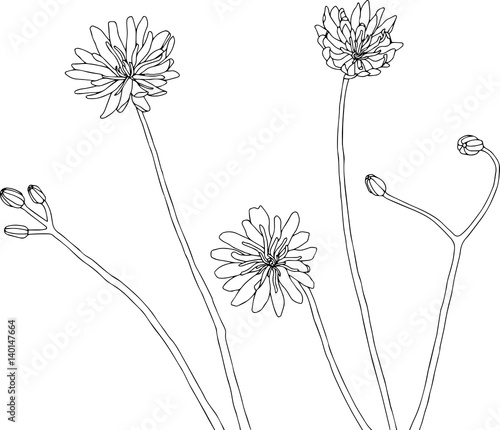 Wildflower Line Drawing : Quot wildflowers illustration vector line drawing in black