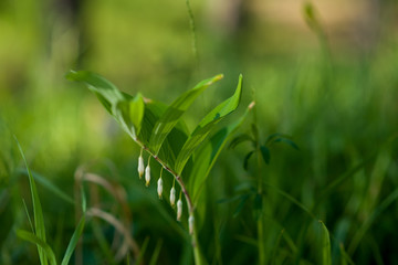 Green grass under the bright sun. Abstract natural backgrounds