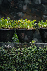Small Tropical Plant in old pot in Bali