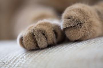Papier Peint - cat paws closeup macro shot
