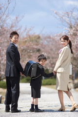 Elementary school boy holding hands with parents under cherry blossoms