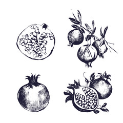 Pomegranate hand drawn set. Collection on white background, isolated fruit whole, cutaway, on a branch. Vector sketch vintage style illustration.