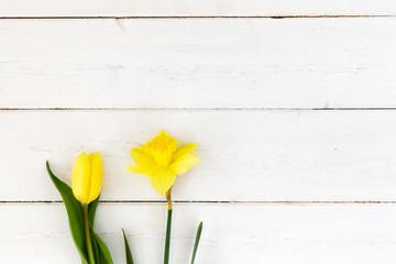 Gelbe Osterglocke und Tulpe auf weißem Holz