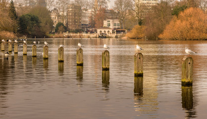 Birds on posts in water