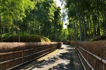 Pathway through bamboo grove, Kyoto Japan 竹林の小道
