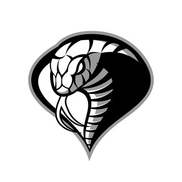 Furious cobra sport vector logo concept isolated on white background. Modern military professional team badge design. Premium quality wild snake t-shirt tee print illustration.