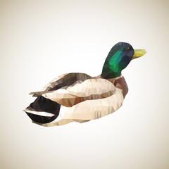 Colored male duck. Triangles polygon vector illustration