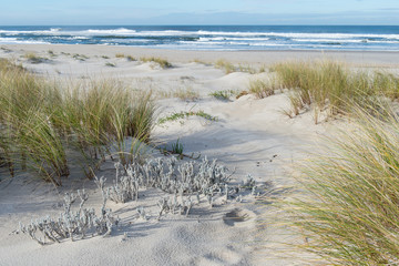Sandy beach with a grass