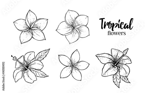 Tropical Flower Line Drawing : Quot hand drawn vector illustration tropical flowers summer