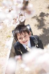 Elementary school boy standing under cherry blossoms