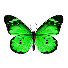 butterfly with open wings top view, the symmetrical drawing, graphics, sketch, vector, color image, green wings with a black pattern on the edges