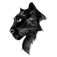 the head is black Panther's profile looking into the distance, graphics sketch vector black and white drawing