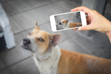 woman hand holding and using mobile,cell phone,smart phone photography and a stray dog on concrete floor with blurred a stray dog on concrete floor.