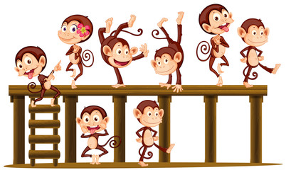 Monkeys playing on the wooden level