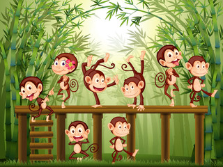 Scene with monkeys in the bamboo forest