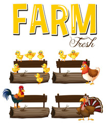 Farm animals and signs