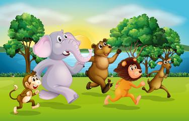 Wild animals racing in the park