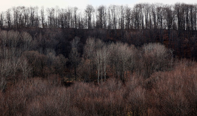 Late autumn. Forest trees without leaves. Horizon.