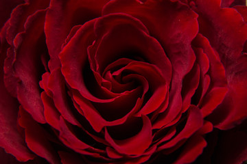 Red Rose, The heart of a Rose