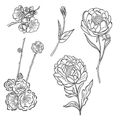 Vector collection of hand drawn peony and rose flowers and leaves isolate