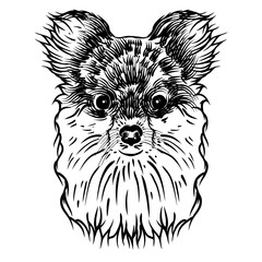 Door stickers Hand drawn Sketch of animals Portrait of Pomeranian doggy. Hand drawn dog illustration. T- shirt and tattoo concept design in black white. Vector.