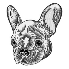 Small cute French Bulldog puppy tattoo style concept on white background. Friendly doggy portrait. Vector illustration.