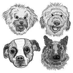 Different type of cartoon dogs with Hand drawn cute puppy. Illustration set with doggy. Artistic canine vector characters.