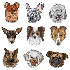 Vector set of different dogs breeds isolated on white. Labradoodle, German Shepherd, Collie, Papillon, Pug, Pomeranian, Bolognese, Toy Terrier, French Bulldog