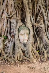 Buddha Head Tree Wat Maha That (Ayutthaya)