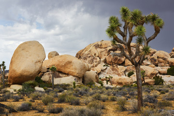 Rock Formation, Joshua Tree National Park, California