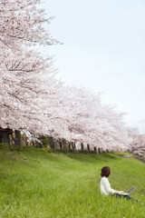 Young woman using laptop in front of cherry blossoms