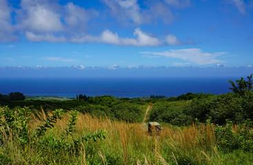 Ocean view in Hawaii