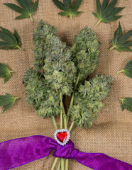 bouquet of fresh cannabis flowers (Mangolope marijuana strain) trimmed and wrapped in purple ribbon over burlap